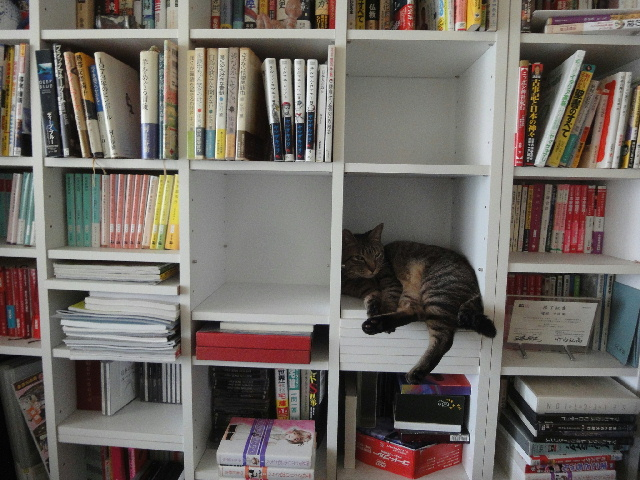 写真 本棚のネコ01.jpg