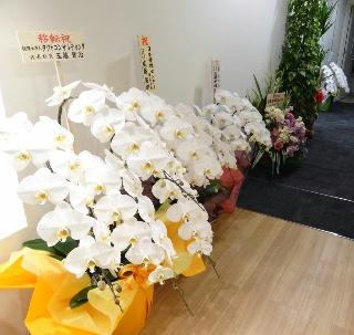 写真 201311新オフィス03「花」.jpg