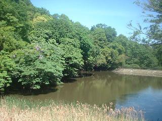 写真140613fri 夫婦池公園上池.jpg
