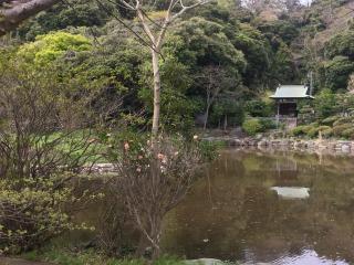 写真150612fri 田辺ヶ池.jpg