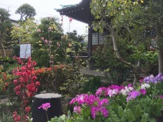 写真151211fri 収玄寺の庭.jpg